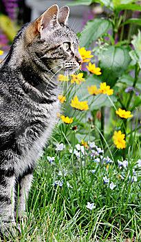 Что делать с котом на дачу