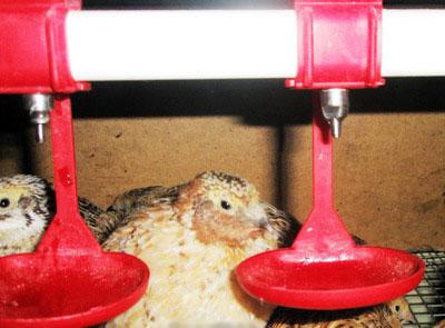 Поилка для птиц самодельные