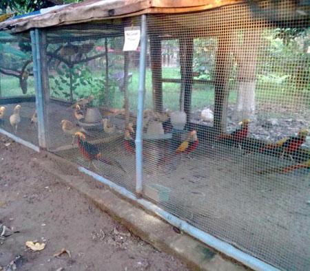 Вольеры для фазанов фото 253