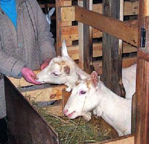 Кормушка для коз своими руками фото